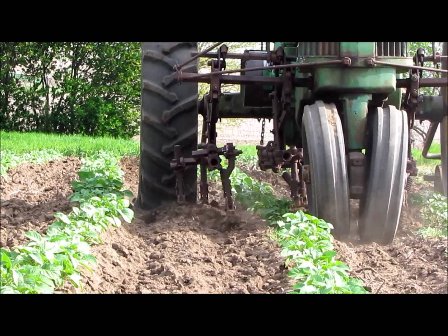 Cultivating potatoes with a two row cultivator on a John ...