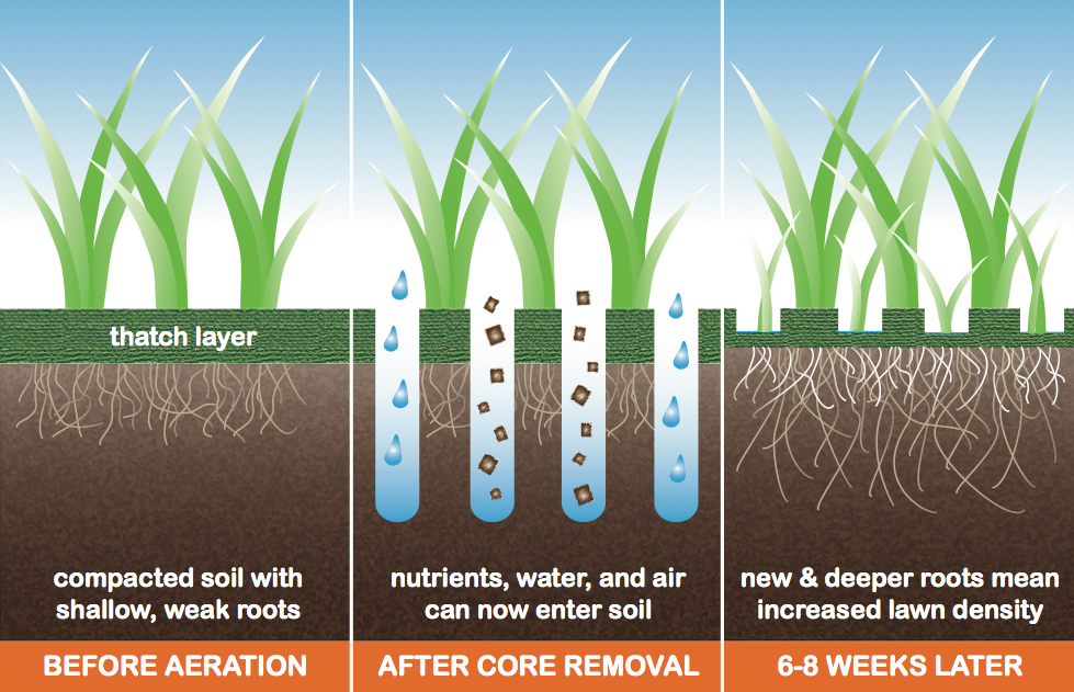 Show your lawn some love, the importance of aeration ...