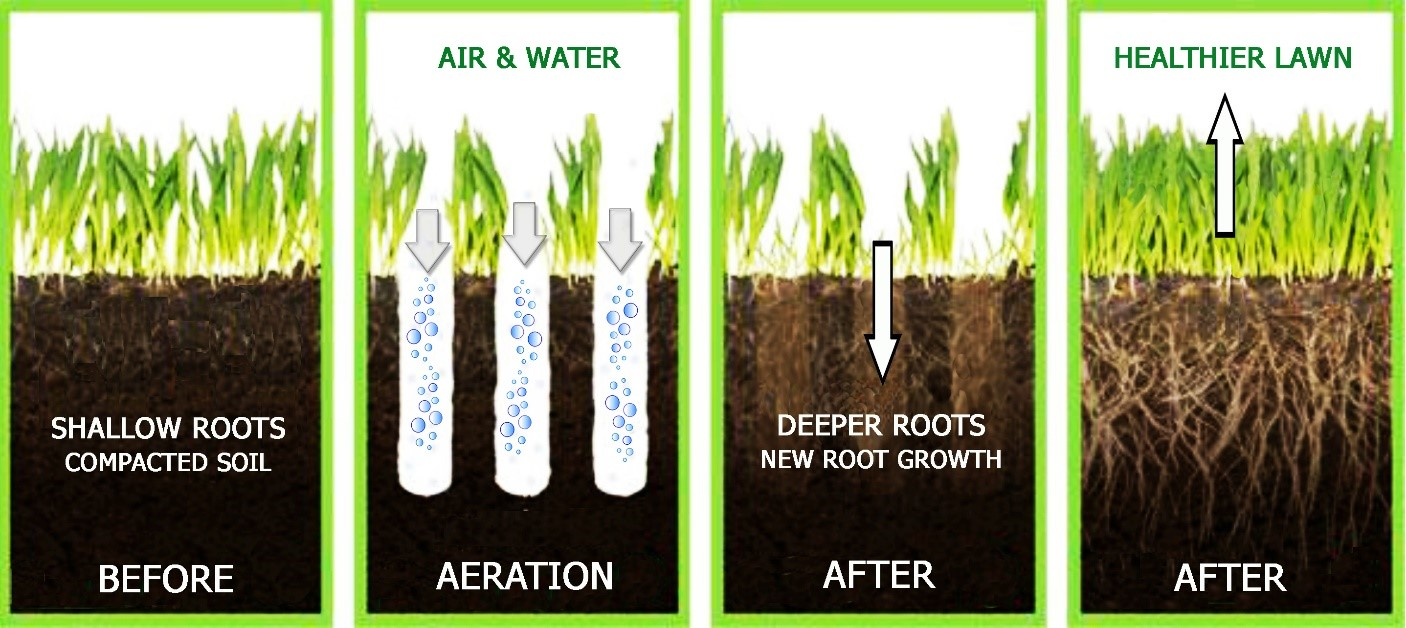 Aeration | The Lawn Institute