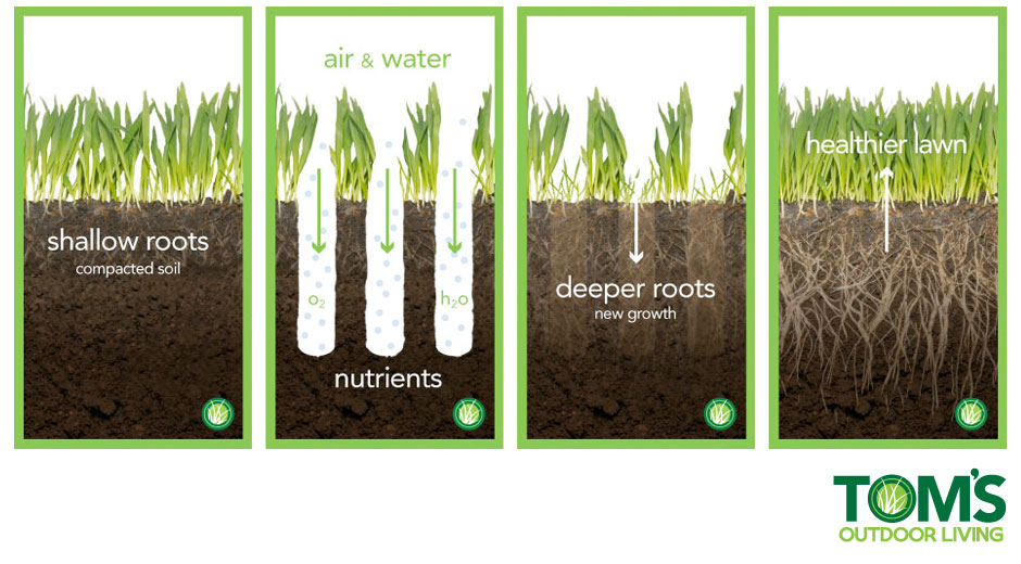 Aeration and Overseeding • Tom's Outdoor Living