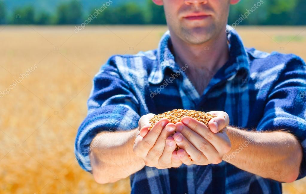 Happy farmer holding ripe wheat corns — Stock Photo © Nomadsoul1 ...